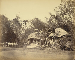 Dwellings in Rural Bengal.